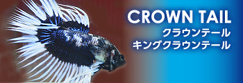 new_crowntail