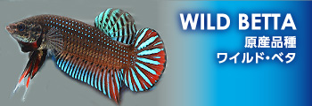 new_wildbetta
